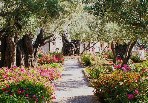 Taman Getsemani photo